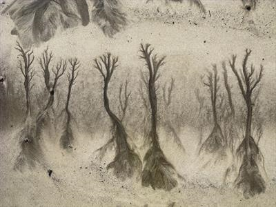 Sand Forest 2