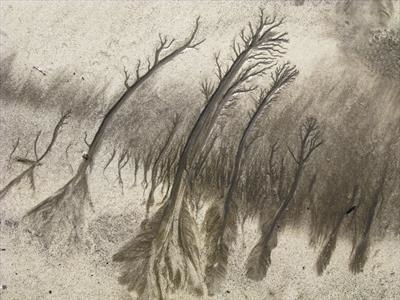 Sand Forest 1