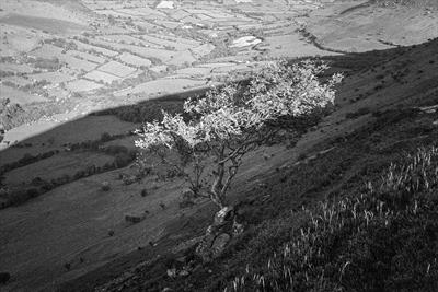 gc9A hills, tree shadows in wales.retouched.176-24