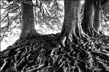 Avebury Beeches 71-26 by Jan Traylen, Photography, Giclee printed photograph