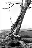 Dorset Tree 157-9a by Jan Traylen, Photography, Giclee printed photograph