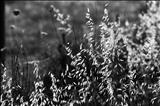 Grass 26 by Jan Traylen, Photography, Giclée printed photograph