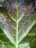 Japanese Mustard Greens 2 by Jan Traylen, Photography, Giclée printed photograph on textured paper