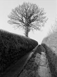 Lane from Doddiscombesleigh by Jan Traylen, Photography, Giclée printed photograph on textured paper