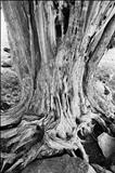 Old Skin, Hergest Ridge by Jan Traylen, Photography, Giclee printed photograph