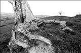 Tired limbs, Dorset roots 157-7a by Jan Traylen, Photography, Giclee printed photograph