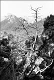 Tramuntana mountain trees 18 by Jan Traylen, Photography, Giclée printed photograph
