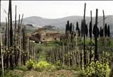 Tuscan Farmhouse by Jan Traylen, Photography, Giclee printed Kodachrome