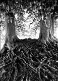 Veins, Avebury Beeches 71-30a by Jan Traylen, Photography, Giclee printed photograph