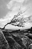 gc20 sharp tor, dartmoor 0056-2 by Jan Traylen, Photography