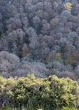 gc43 teign gorge in autumn, devon 4987 by Jan Traylen, Photography