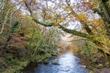 gc44 autumnal river teign, devon 5001 by Jan Traylen, Photography