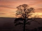 gc46 sunset tree, bridford hills, devon 3886 by Jan Traylen, Photography